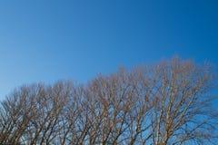 Fondo degli alberi forestali Fotografie Stock