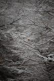 Fondo degli alberi glassati nell'inverno in Pirenei Fotografia Stock