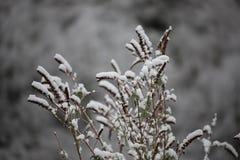Fondo degli alberi glassati nell'inverno in Pirenei Immagini Stock Libere da Diritti