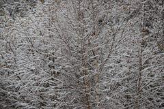 Fondo degli alberi glassati nell'inverno in Pirenei Fotografie Stock