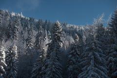 Fondo degli alberi nevosi di Natale in foresta dalla cima immagini stock