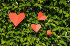 Fondo dei biglietti di S. Valentino con quattro cuori su erba Fotografia Stock Libera da Diritti