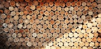 Fondo dei ceppi di albero Fotografia Stock