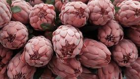 Fondo dei fiori artificiali rossi di Aristata del Protea Immagine Stock