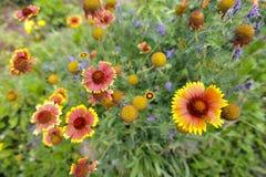 Fondo dei fiori del prato Immagini Stock Libere da Diritti