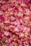 Fondo dei fiori della buganvillea Piccoli petali rosa come struttura e fondo Reticolo floreale Fotografie Stock