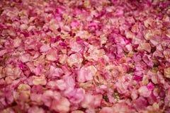 Fondo dei fiori della buganvillea Piccoli petali rosa come struttura e fondo Reticolo floreale Fotografie Stock Libere da Diritti
