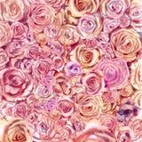 Fondo dei fiori delle rose in acquerello illustrazione di stock