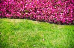 Fondo dei fiori e dell'erba Fotografia Stock Libera da Diritti