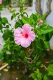 Fondo dei fiori e delle piante Immagine Stock