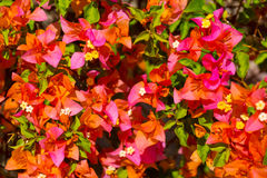 Fondo dei fiori e delle piante tropicali Fotografie Stock