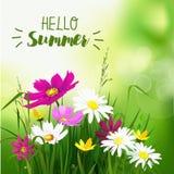 Fondo dei fiori selvaggi di estate illustrazione di stock