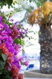 Fondo dei fiori tropicali Immagine Stock Libera da Diritti