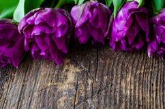 Fondo dei fiori dei tulipani fotografie stock libere da diritti