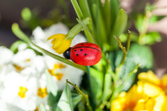 Fondo dei fiori vivi colourful di estate Immagine Stock