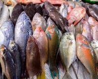 Fondo dei frutti di mare Fotografia Stock Libera da Diritti