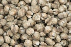 Fondo dei frutti di mare dei cuori edule Fotografia Stock