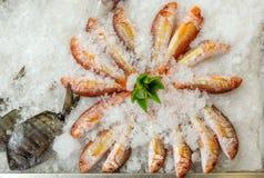 Fondo dei frutti di mare dei pesci freschi su ghiaccio Fotografie Stock Libere da Diritti