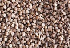 Fondo dei grani del grano saraceno Immagini Stock