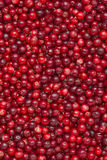 Fondo dei Lingonberries fotografie stock