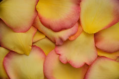 Fondo dei petali rosa gialli Fotografia Stock Libera da Diritti