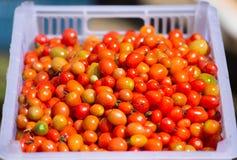 Fondo dei pomodori ciliegia, Tailandia Immagini Stock