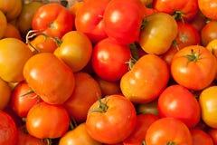 Fondo dei pomodori freschi da vendere Fotografie Stock Libere da Diritti