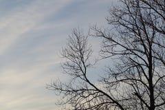 Fondo dei rami di albero Fotografia Stock