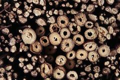 Fondo dei rami di legno marroni sottili di sezione trasversale, anelli annuali Fotografia Stock Libera da Diritti