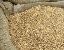 Fondo dei semi del grano in un sacco di iuta dopo il raccolto Fotografie Stock
