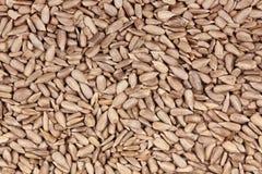 Fondo dei semi di girasole Fotografie Stock Libere da Diritti