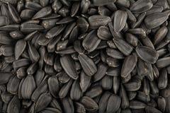 Fondo dei semi di girasole Fotografia Stock