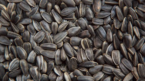 Fondo dei semi di girasole immagine stock