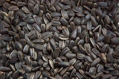 Fondo dei semi di girasole fotografia stock libera da diritti