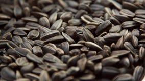 Fondo dei semi di girasole immagini stock libere da diritti