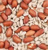 Fondo dei semi e delle arachidi di girasole Immagini Stock