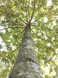 Fondo del árbol Fotografía de archivo libre de regalías