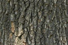 Fondo del árbol de corteza fotografía de archivo