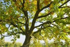 Fondo del árbol de la naturaleza del otoño Imágenes de archivo libres de regalías