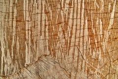 Fondo del árbol de la textura Imagen de archivo libre de regalías