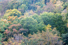 Fondo del árbol del otoño fotos de archivo libres de regalías