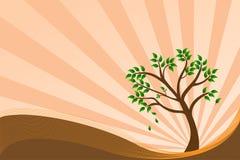 Fondo del árbol, ilustración del vector Fotos de archivo