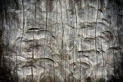 Fondo del árbol tallado Imágenes de archivo libres de regalías