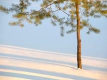 Fondo del árbol y de la nieve Foto de archivo libre de regalías
