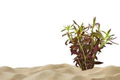 Fondo del acuario con la planta púrpura Imágenes de archivo libres de regalías
