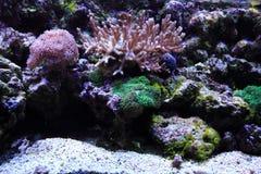 fondo del acuario del mar Foto de archivo