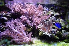 fondo del acuario del mar Fotos de archivo libres de regalías