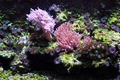 fondo del acuario del mar Imagen de archivo