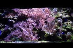 fondo del acuario del mar Imagenes de archivo