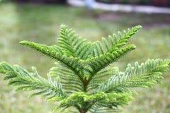 Fondo del arbusto del árbol con rocío, vacío Foto de archivo libre de regalías